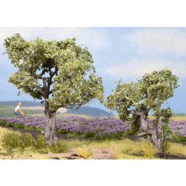 Olijf Bomen 21995