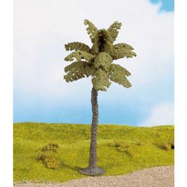 Palm Boom 21971