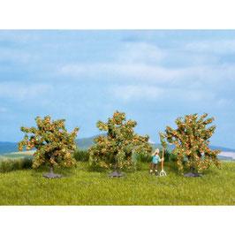 Sinaasappelbomen 25114
