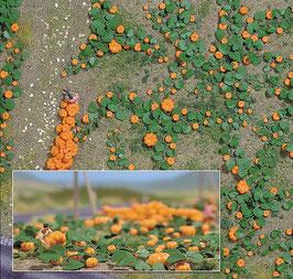 Busch 1201 Pompoenveld HO