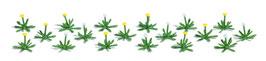 Busch 1244 18 Paardebloemenplanten