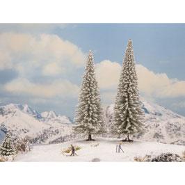 Sneeuwsparren
