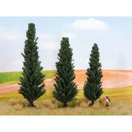 Cypress Bomen 21998