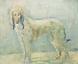 Afghaanse hond.