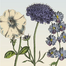 3421 GREETING CARD 'GARDENFLOWERS' WITH PURPLE RETRO ILLUSTRATIONS OF FLOWERS. RELIVE OLD TIMES!