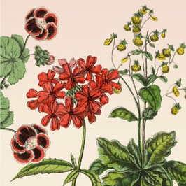 3422 GREETING CARD 'GARDENFLOWERS' WITH RED RETRO-STYLE FLOWERS
