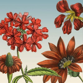 3425 GREETING CARD 'GARDENFLOWERS' WITH RETRO ILLUSTRATIONS OF RED GARDENFLOWERS.