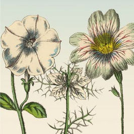 3426 GREETING CARD 'GARDENFLOWERS' WITH RETRO WHITE FLOWERS.