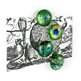 Eye Magnets Peacock