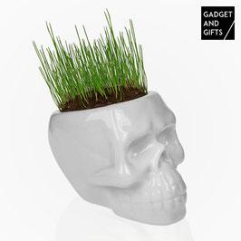 Gras Totenkopf im Blumentopf