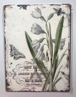 Blechschild Schneeglöckchen Beige Grün Vintage 33 x 25 cm