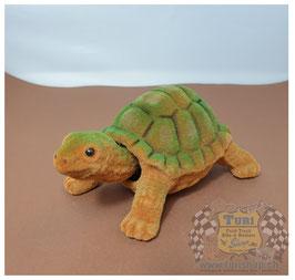 Tartaruga / Schildkröte