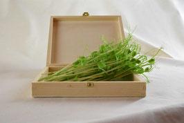 Erbse - Microgreen