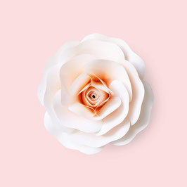 Papier-Rose in Apricot