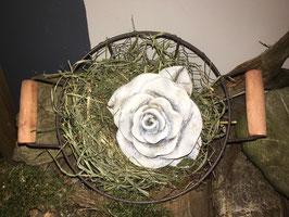 Rosenkopf im Körbchen