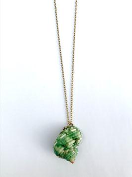 Collier coquillage vert