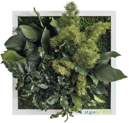 styleGREEN Pflanzenbild (22x22cm)