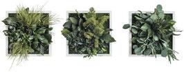 styleGREEN Pflanzenbild (22x22cm) 3er Set