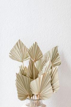 Palmwedel natur