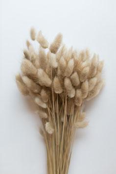 Getrockneter Lagurus - Natur 1 Bund