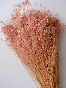 GETROCKNETES BROOM BLOOM - ROSA