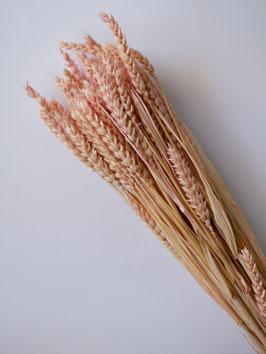 Getrocknetes Weizen- Puder