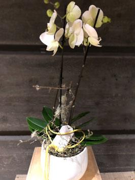 Orchidee dekoriert mit Übertopf