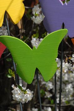 Schmetterling SUSI