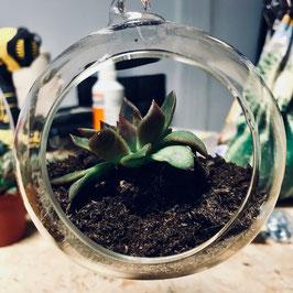 Cadre végétal et succulente