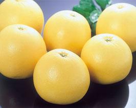 台湾産 白柚(ざぼん)2個入(約2~3㎏)