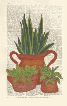Kunstdruck Zimmerpflanzenfreunde