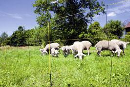 EasyNet Schafnetz mit Bodenabstand