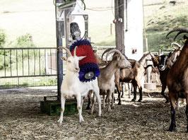 Kratzbürste HAPPYCOW MiniSwing für Kälber und Ziegen