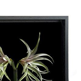 Frame 60x90 cm