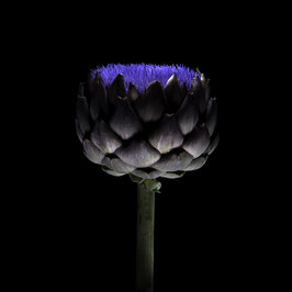 Photoprint Artichoke