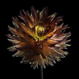 Photoprint Dahlia Spike orange