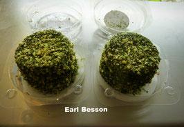 Fromage frais enrobé Herbes
