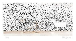 Ohne Titel (Der große Dalmatiner) ungerahmt