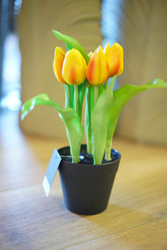Tulpen im Topf gelb-rot 24cm