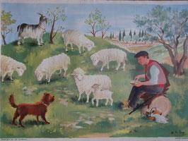 """Affiche scolaire """"les moutons"""" 60's"""