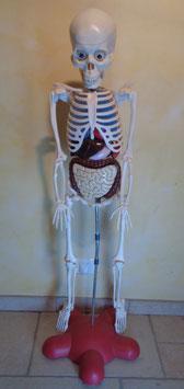 Squelette pédagogique