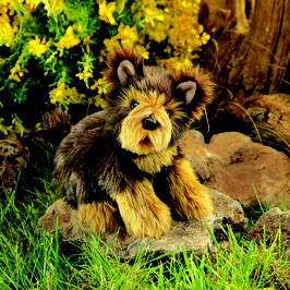 Yorkshire Terriër Puppy