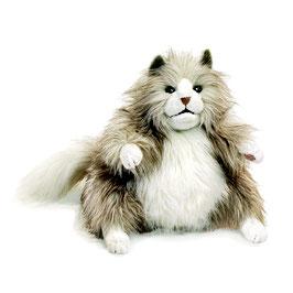 Pluizige kat