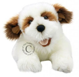 Hond (bruin/wit)