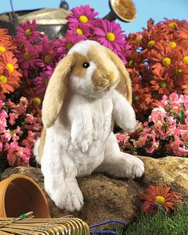Staand hangoor konijn