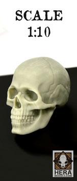 Academic Skull