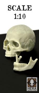 Academic Skull + Jaw