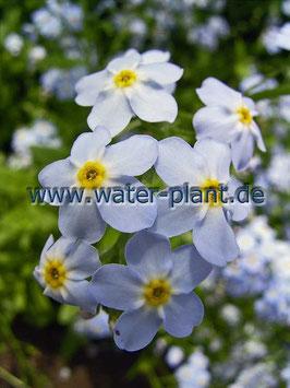 "Pflanzensortiment ""Miniteich blau - violett"""
