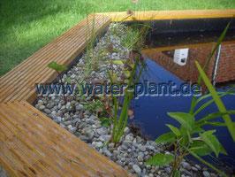 Pflanzrolle mit Pflanzen