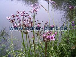 """Pflanzensortiment """"gegen grünes Wasser"""""""